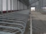 Строительство молочной фермы в п.Маяковское  фото 3