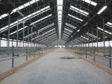 Строительство молочной фермы в п.Маяковское  фото 4