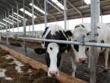 Строительство молочной фермы в Гусевском районе - фото 2