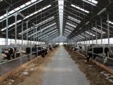 Строительство молочной фермы в Гусевском районе - фото 3