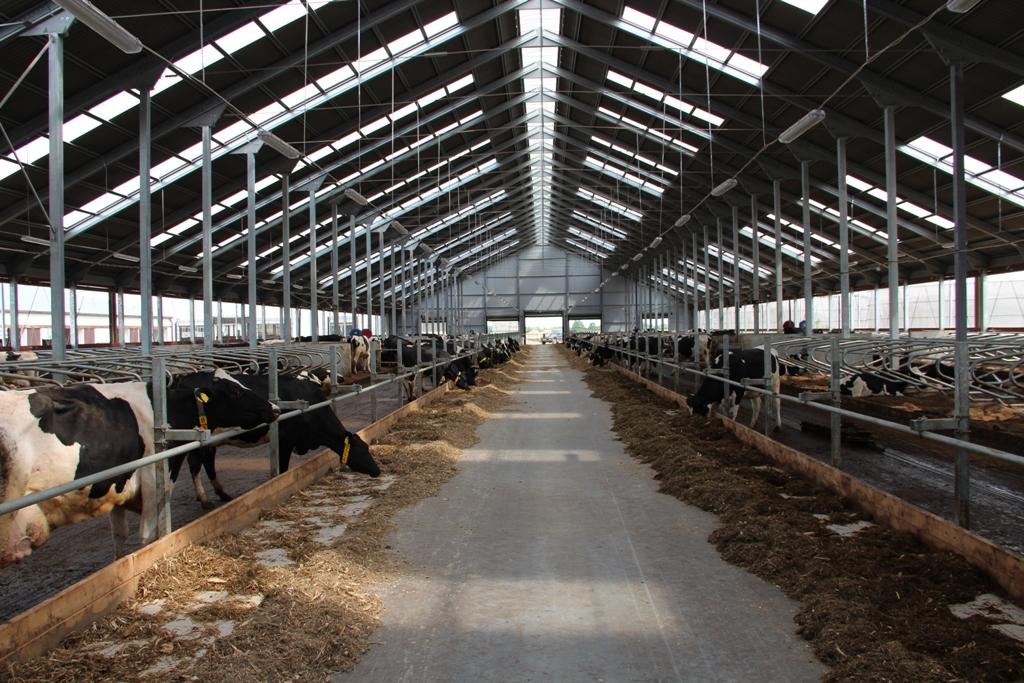 Сельскохозяйственные здания и сооружения из металлоконструкций Снимок сельскохозяйственного здания в Гусевском районе