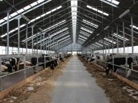 Фотография действующей молочной фермы из металлических конструкций