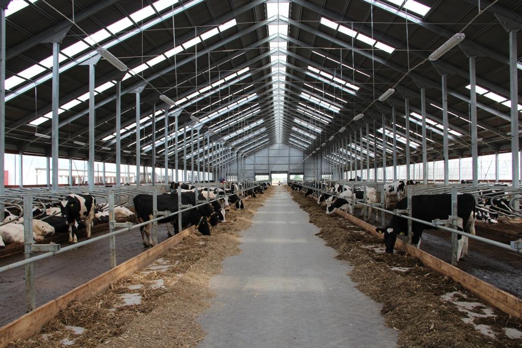 система вентиляции на животноводческих фермах